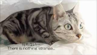getlinkyoutube.com-オシッコちびる寸前の猫~恐怖で右往左往してジダンダ -Cat nealy wet her's pants in panic
