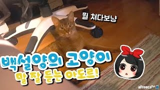 getlinkyoutube.com-[백설양TV]백설양의 개냥이 아도르