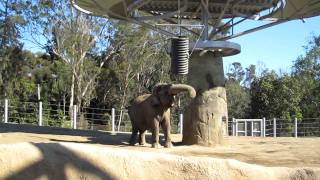 Elephant Tipping Barrel
