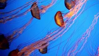 getlinkyoutube.com-Underwater Film of Various Sea Life in the Pacific: Video