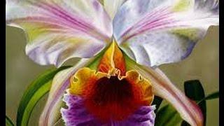 getlinkyoutube.com-Cómo cultivar Orquídeas - TvAgro por Juan Gonzalo Angel