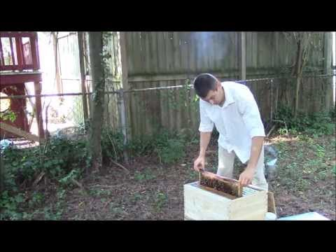 Best way to start beekeeping - Complete hive with bees.