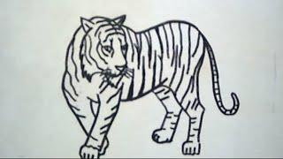 getlinkyoutube.com-How to Draw a Tiger (Cara Menggambar Harimau)