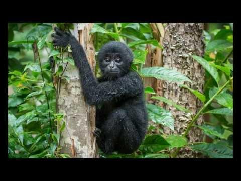 amazing place - Sumatra - indonesia