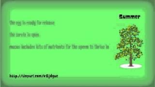 getlinkyoutube.com-Ovulation Symptoms - What's In Your Discharge?