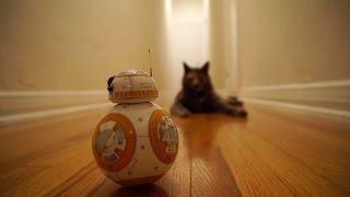 getlinkyoutube.com-Mochi the Cat Meets BB8 from Star Wars: The Force Awakens