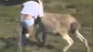 getlinkyoutube.com-Video de riza la del burro pelicula completa