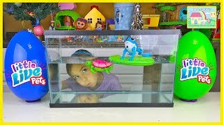 getlinkyoutube.com-Little Live Pets Water Surprise Toys Giant Eggs Toy Surprises Lil' Turtle & Lil' Frog Really Swim