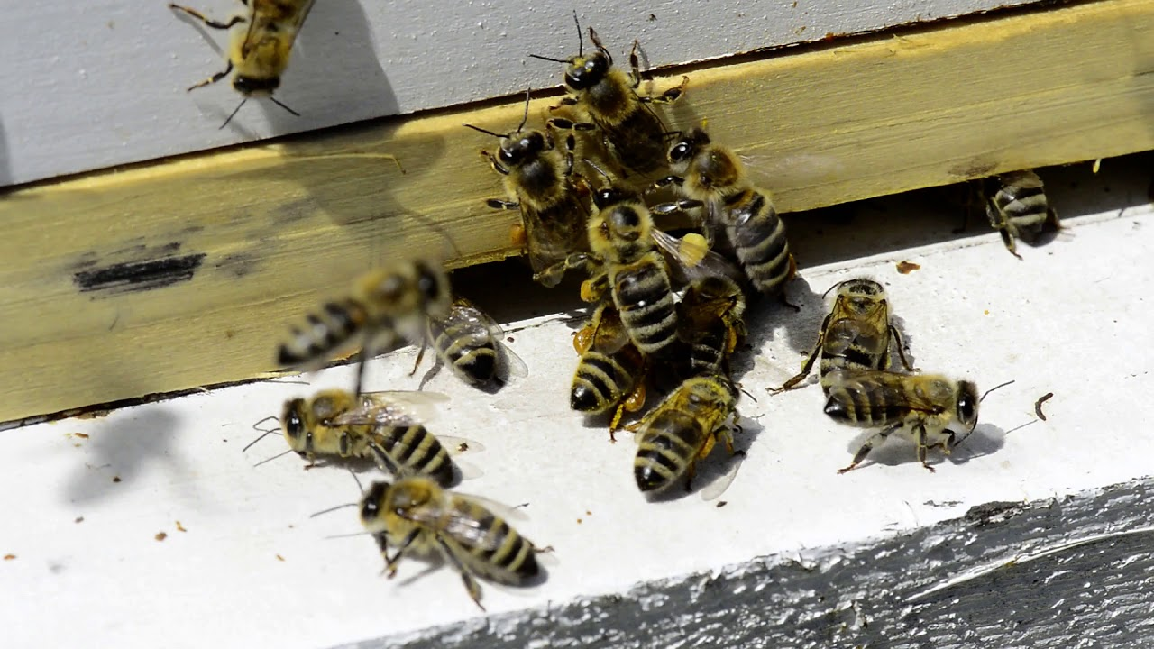 Sakupljanje polena