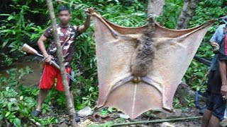 getlinkyoutube.com-GIANT BAT OR SOMETHING ELSE?