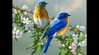 getlinkyoutube.com-Most beautiful creature video - animals and bird photography || Birds