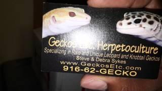 """getlinkyoutube.com-My Big Boy """"THANOS"""" A Super Giant Leopard Gecko Episode 1"""