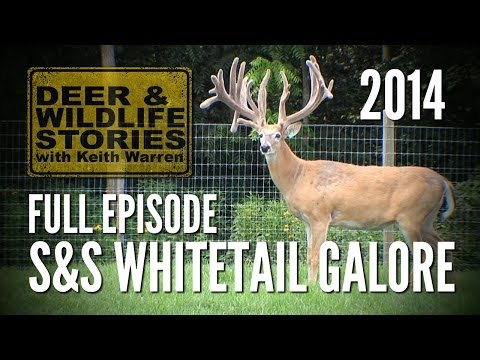 S&S Whitetail Galore - The Sage of Deer Farming