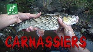 Pêche du chevesne au crankbait en Baitfiness (BFS) - [Carnassiers FISHARE]