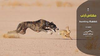 getlinkyoutube.com-مقناص الأرنب في السودان  ( عبدالله العمير )rabbit hunting with dgs