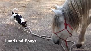 14.04./25.05.2017 - Hund und Ponys