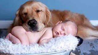 Najlepsze śmieszne koty i psy kochają dzieci. Kompilacja   Nowy