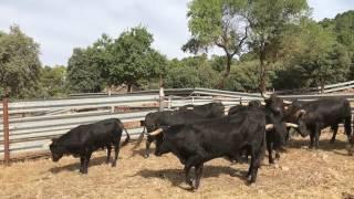 Toros para la Vegallera, 24 6 17