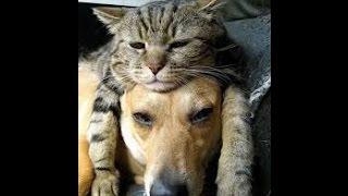 getlinkyoutube.com-おもしろ猫のハプニング わらっちゃうよ~