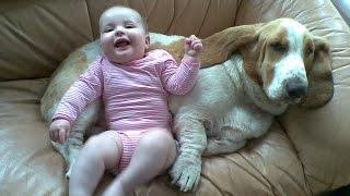 Basset Hound Dog kisses and Baby giggles - Dog Loves Baby Compilation