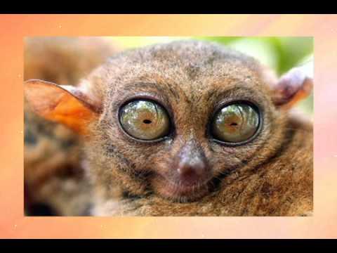 Os animais mais feios do mundo