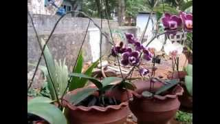 getlinkyoutube.com-my orchid garden