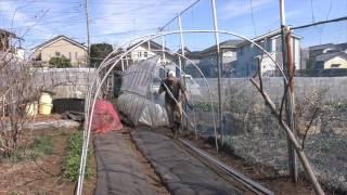 菜園だより170224菜っ葉収穫・アーチ支柱