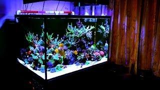 getlinkyoutube.com-Gary's SPS Reef Tank