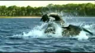 getlinkyoutube.com-Deinosuchus vs Sarcosuchus