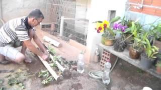 como plantar e molhar moranguinhos em tubo pvc
