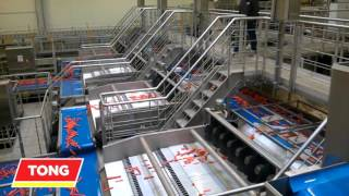 Carrot Processing - Tong Carrot Grading and Washing Packhouse Handling Line