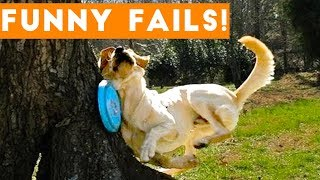 TRY NOT to LAUGH Animals FUNNY PET FAILS Compilation April 2018 | Epic Pet Videos & Moments