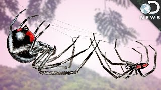 3 Things That Make Spider Sex Horrifying
