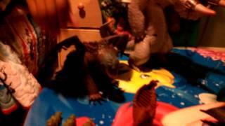 getlinkyoutube.com-How to train  your dragon 2 Anthony's toys