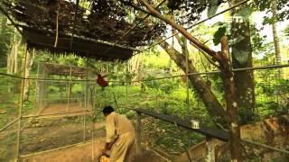 getlinkyoutube.com-NET17 - Pulau Seram, Surga Burung Endemik di Maluku