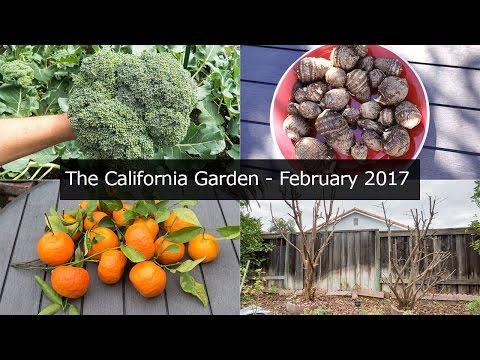 The California Garden - Feb 2017 - Irvine, Zone 10