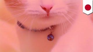 getlinkyoutube.com-猫叩きつけ殺す 大量死も関与