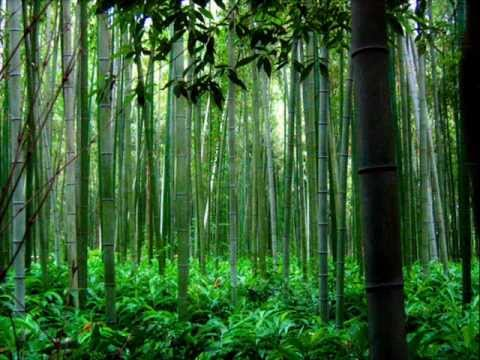 Trail of the Angels - bamboo flute chinese music