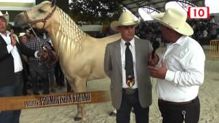 getlinkyoutube.com-Equino: Caballos ganadores en la feria Xmatkuil, Yucatán 2014