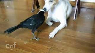 getlinkyoutube.com-Un pájaro dándole de comer al gato y al perro