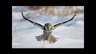 getlinkyoutube.com-Owls: The Prophets Who See In The Night (Kris Vallotton)