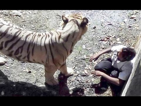 White tiger attack : Student was Killed by Tiger in Delhi Zoo , India