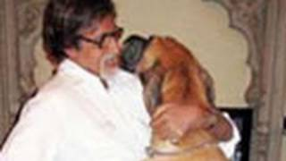getlinkyoutube.com-Bollywood Stars and Their Pets - Latest Bollywood News