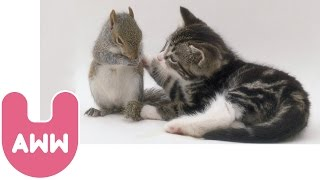 getlinkyoutube.com-Cat Adopts Baby Squirrels