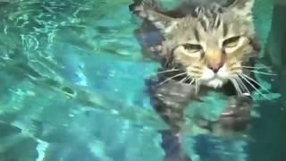 getlinkyoutube.com-Swim Kitty