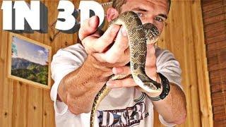 getlinkyoutube.com-3D Video extreme 4 (scary snake!)