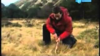 Download video trampa para conejos zorrillos zorros - Como atrapar ratas ...