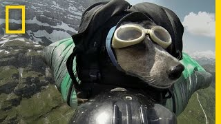 getlinkyoutube.com-Dean Potter BASE Jumps With His Dog | National Geographic