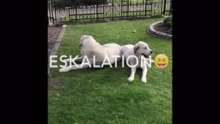 getlinkyoutube.com-Owtscharka Eskalation 😜