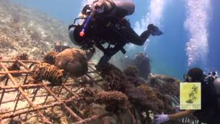 getlinkyoutube.com-Coral Gardening at Hidden Reef, Gili Trawangan